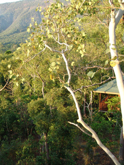 Eucalypt Bungalow