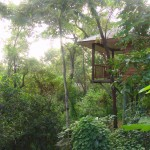 Deluxe eco-designed Eucalypt Bungalows have forest views
