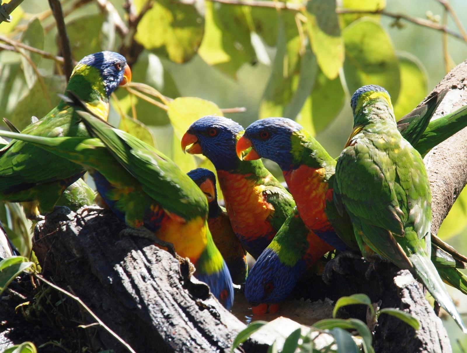 http://www.thalabeach.com.au/wp-content/uploads/2010/07/Thala_Beach_Lodge_00461.jpg