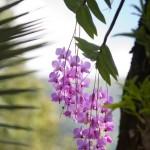 Thala_Beach_Nature_Reserve (102)
