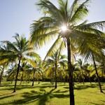 Thala_Beach_Nature_Reserve (117)