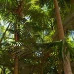 Thala_Beach_Nature_Reserve (21)