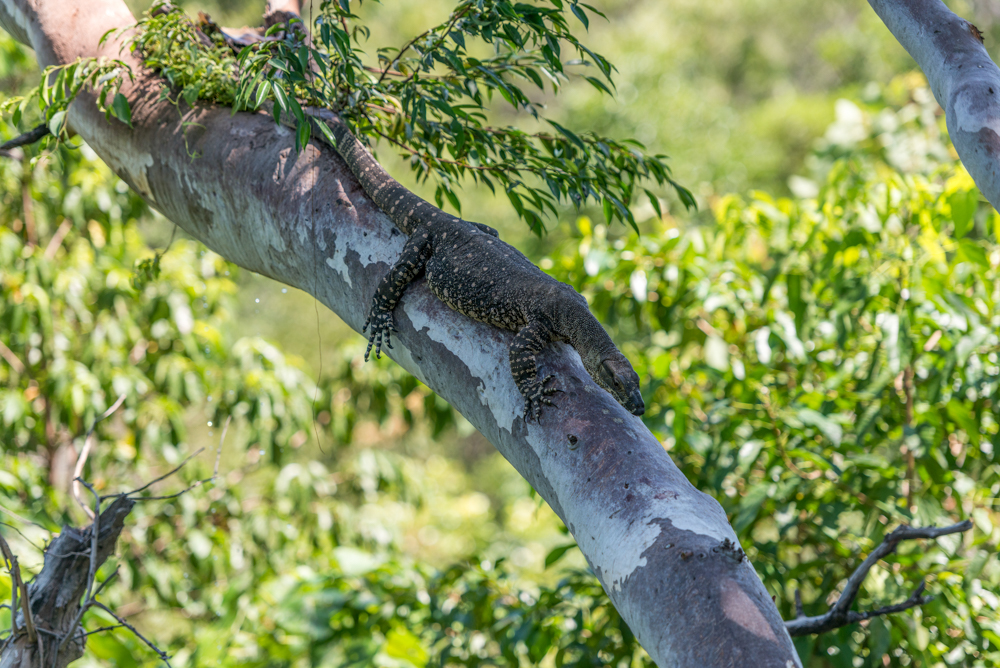 http://www.thalabeach.com.au/wp-content/uploads/2010/07/Thala_Beach_Nature_Reserve_2016__62.jpg