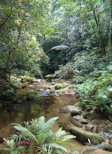 daintree rainforest creek
