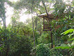 thala eucalypt bungalow forest canopy