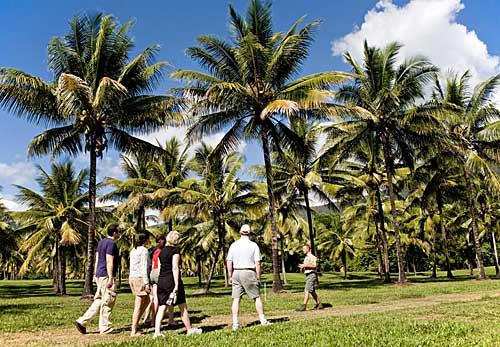 Coconut Odyssey