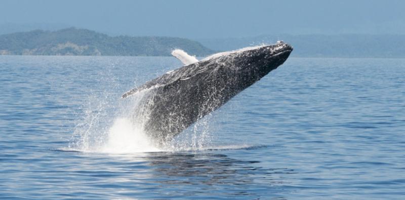 humpback whales port douglas | Thala Beach Nature Reserve