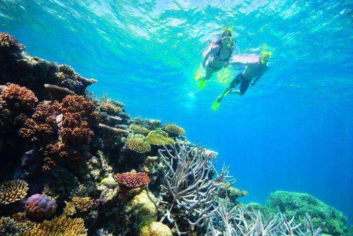 Agincourt Reef, Great Barrier Reef