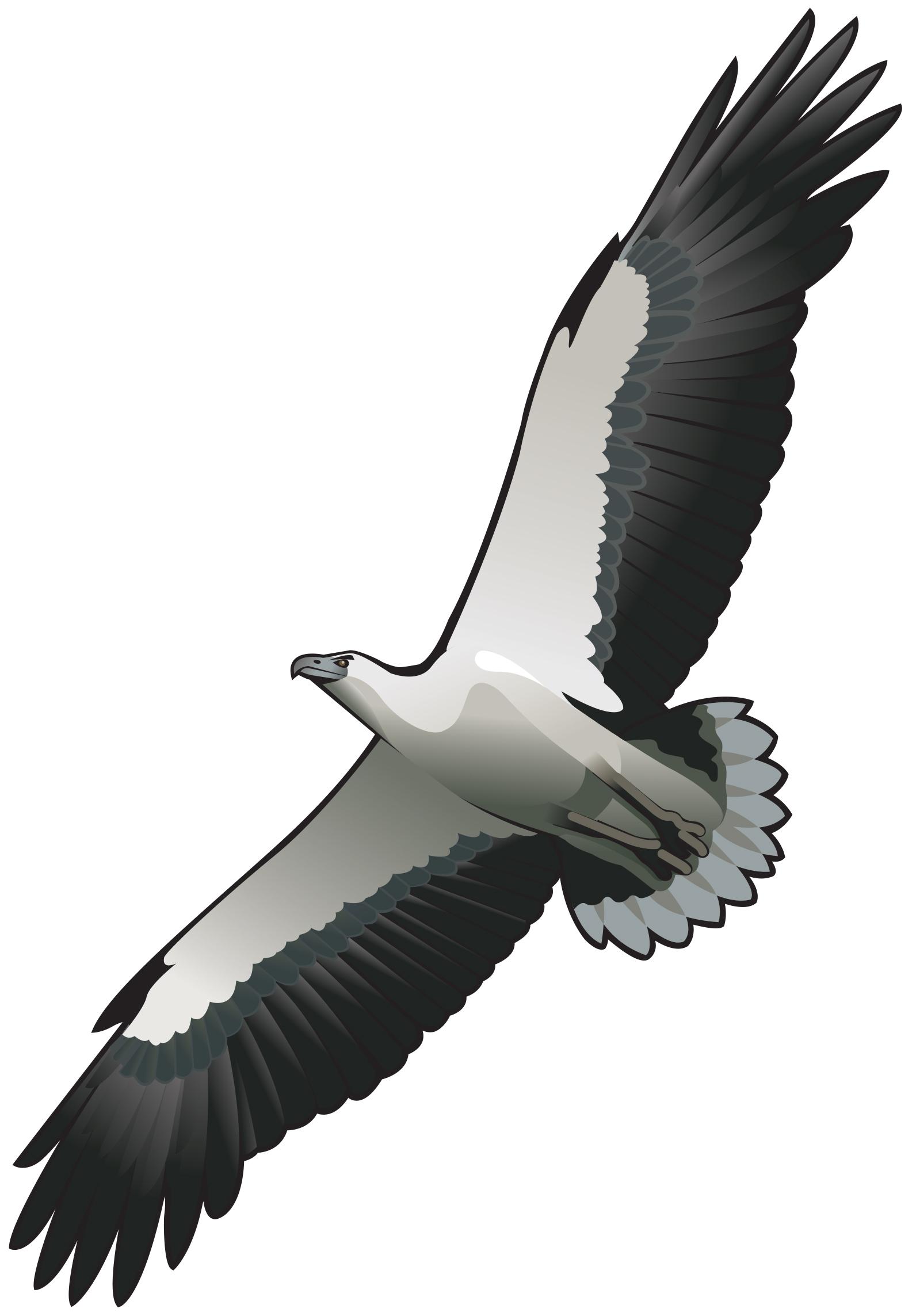 http://www.thalabeach.com.au/wp-content/uploads/2014/11/TBNR-Sea-eagle.jpg