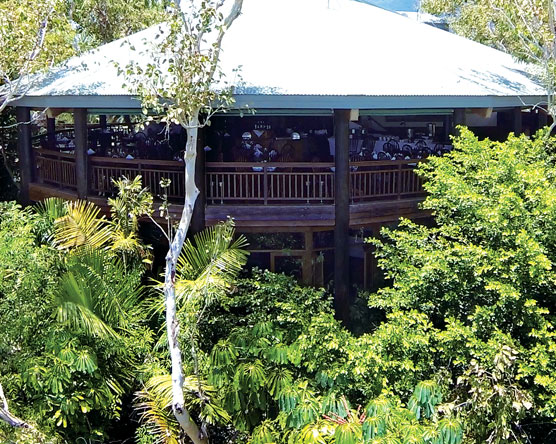 Dining in the Tree Tops at Ospreys Restaurant Port Douglas
