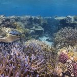 Great Barrier Reef coral spawning