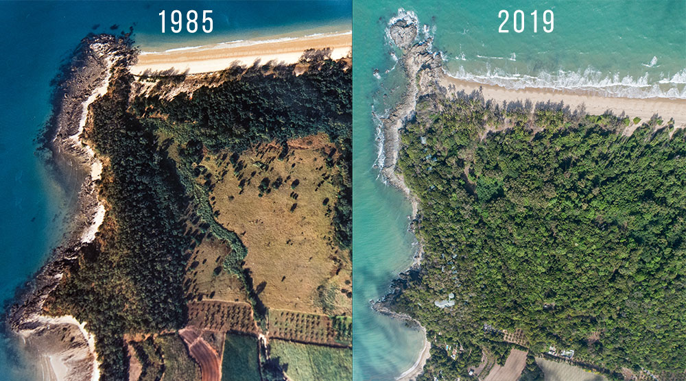Thala Beach Nature Reserve from 1985 to 2019