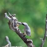 Birdlife at Thala Beach