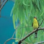 Birdwatching at Thala
