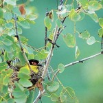 Guided Birdwatching