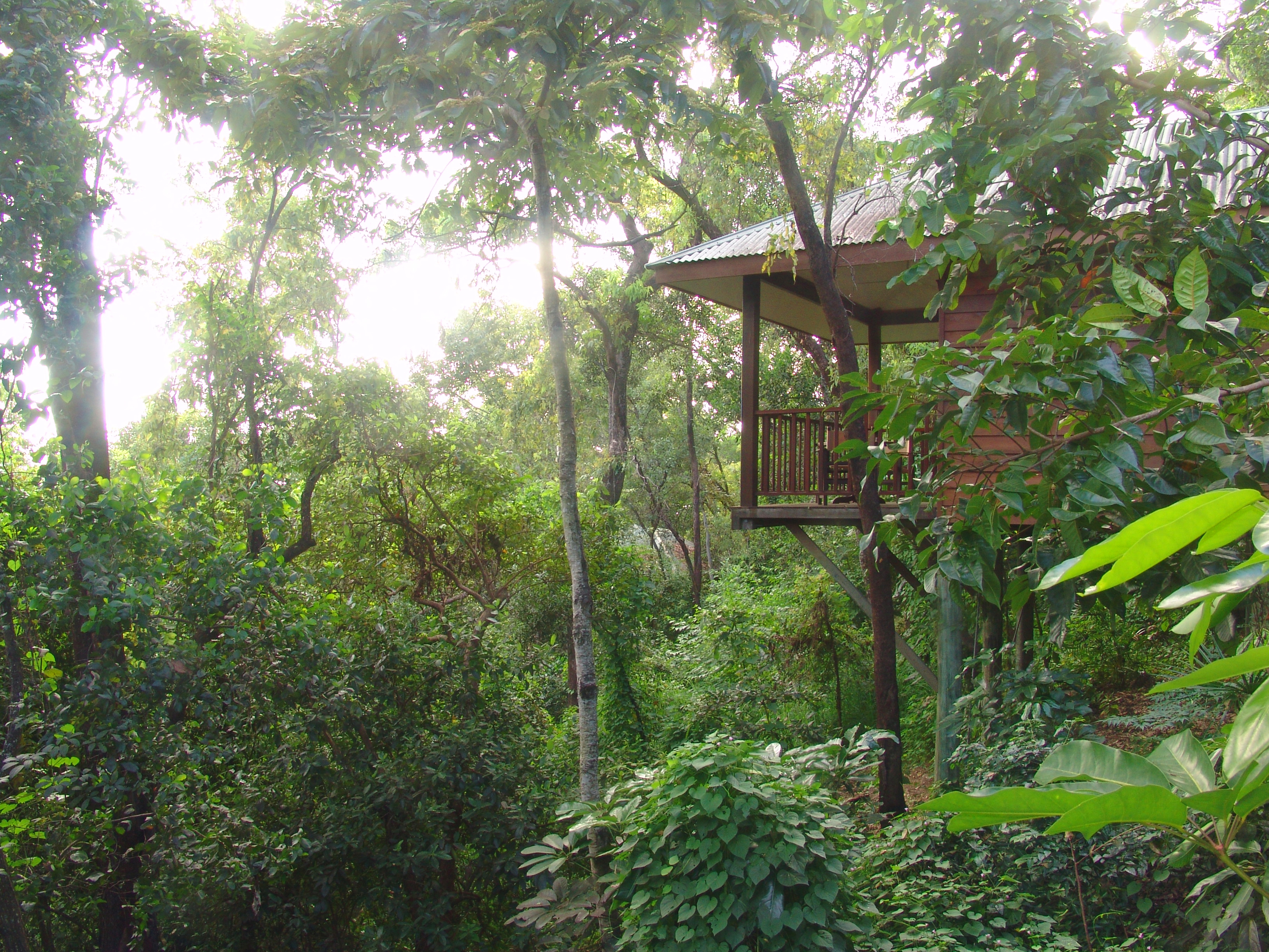 https://www.thalabeach.com.au/wp-content/uploads/2010/07/Thala-eucalypt-bungalow-forest-canopy.jpg