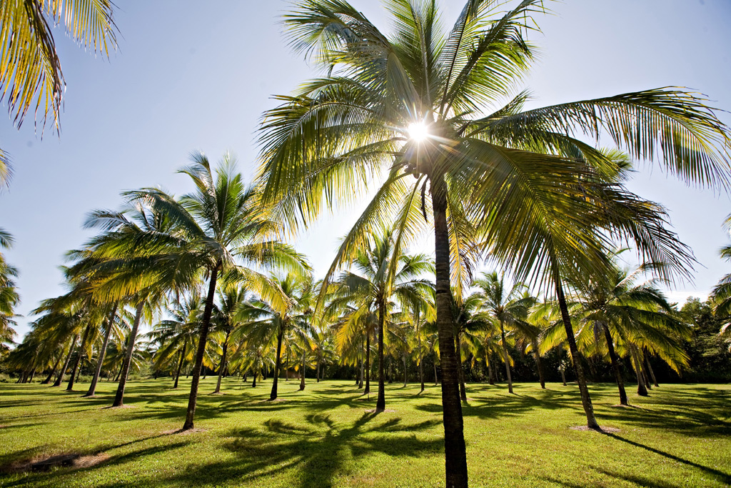 https://www.thalabeach.com.au/wp-content/uploads/2010/07/Thala_Beach_Nature_Reserve-117.jpg