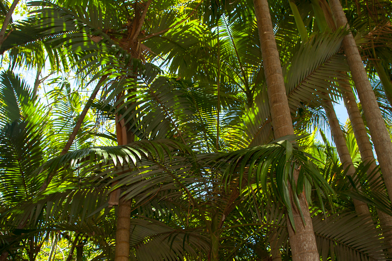 https://www.thalabeach.com.au/wp-content/uploads/2010/07/Thala_Beach_Nature_Reserve-21.jpg
