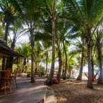 Thala_Beach_Nature_Reserve-869