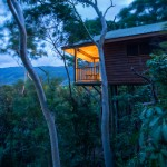 Eco-styled deluxe bungalows are positioned within native forest