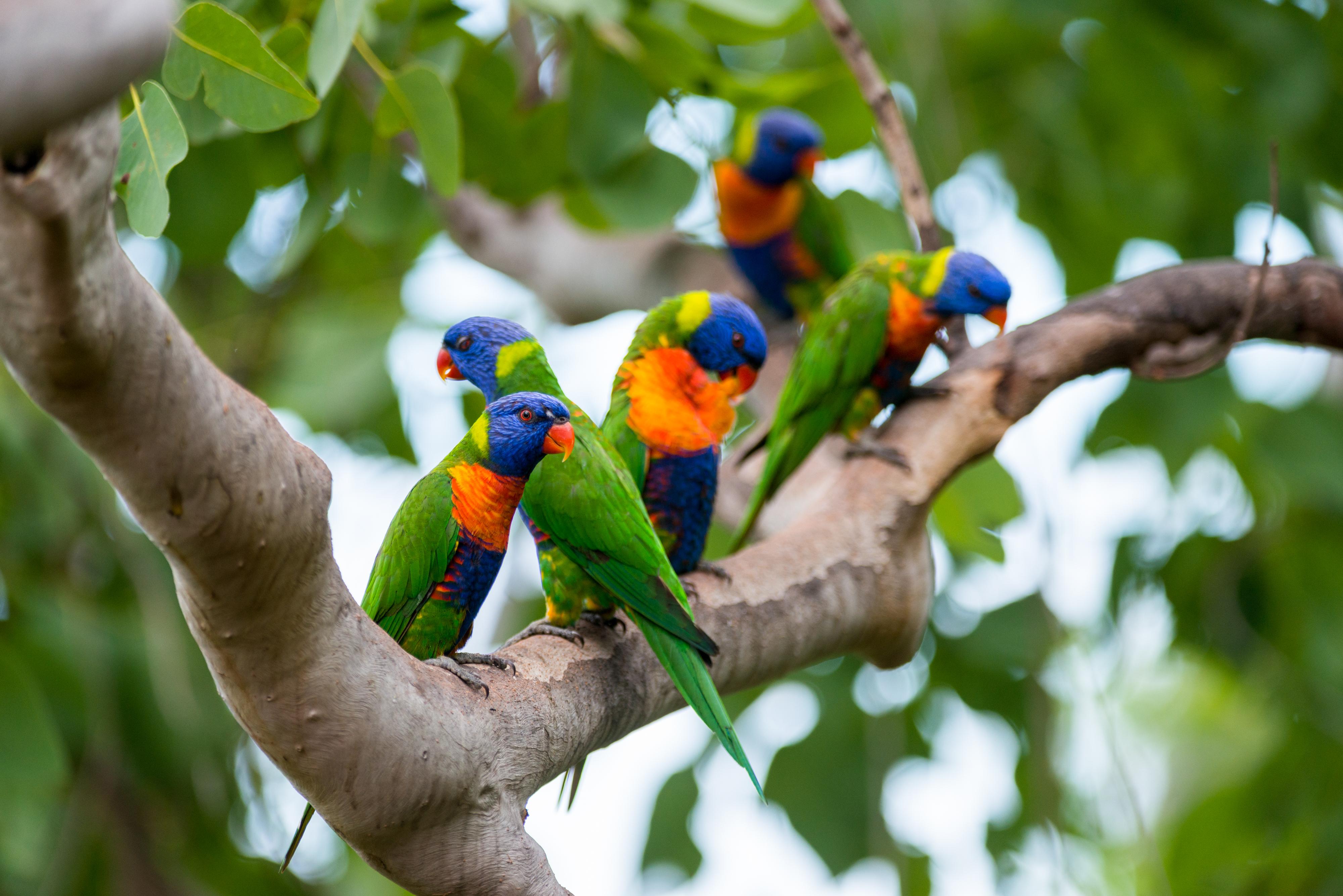 https://www.thalabeach.com.au/wp-content/uploads/2010/07/Thala_Beach_Nature_Reserve_2016__25.jpg