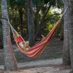 Hammock in palm grove at Oak Beach