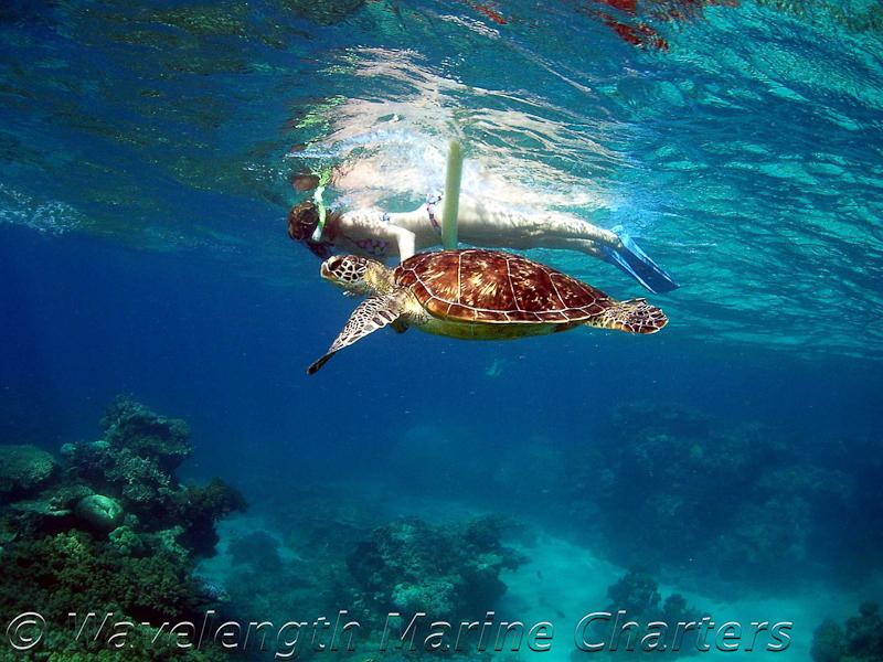 https://www.thalabeach.com.au/wp-content/uploads/2010/07/Turtle-Snorkeler-1.jpg