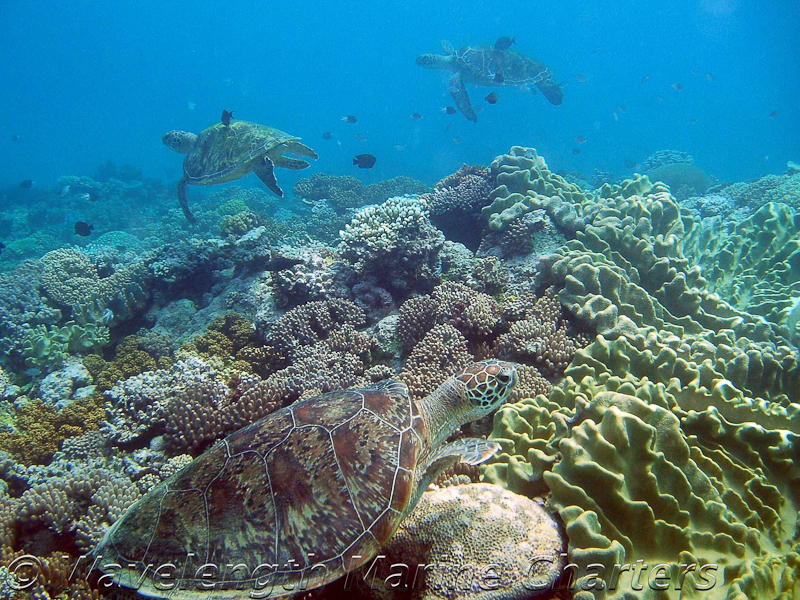 https://www.thalabeach.com.au/wp-content/uploads/2010/07/Turtles-in-Turtle-Bay-1.jpg