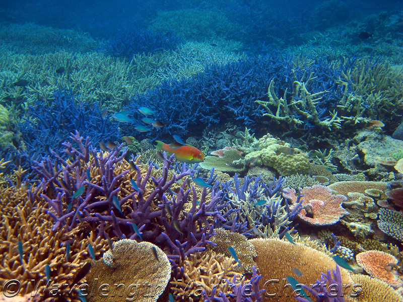 https://www.thalabeach.com.au/wp-content/uploads/2010/07/Typical-Coral-Garden-at-RayBan-2.jpg