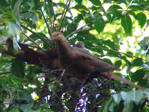 https://www.thalabeach.com.au/wp-content/uploads/2010/07/habitats-01.jpg