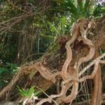 Rainforest at Thala
