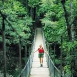 rainforest-bridge