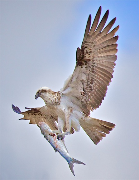 https://www.thalabeach.com.au/wp-content/uploads/2011/09/3.Thala-Beach-Lodge-Ospreys-cmccloud-3.jpeg