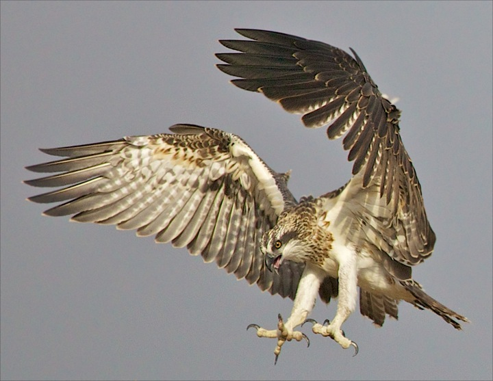 https://www.thalabeach.com.au/wp-content/uploads/2011/09/Thala-Beach-Lodge-Ospreys-cmccloud-16.jpeg