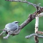Thala Birdlife
