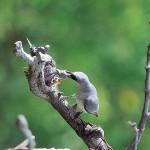 Thala Birdwatching Tours