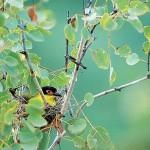 Thala Birdwatching