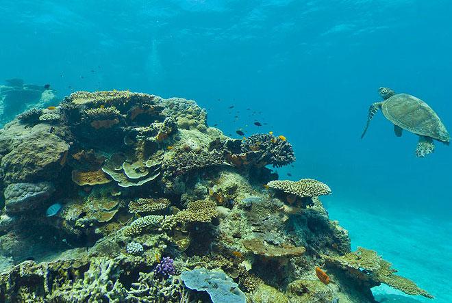 catlin seaview survey australia