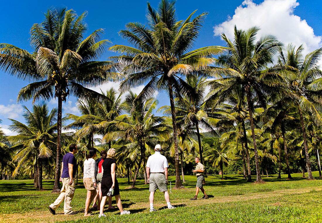 Thala Beach Coconut Odyssey free tour