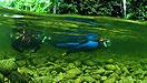 Mossman River Snorkelling