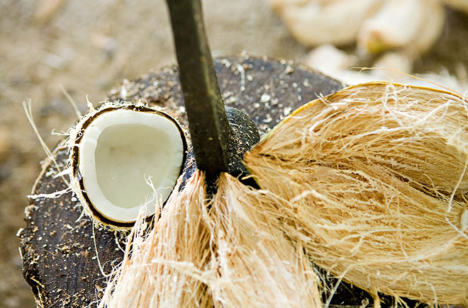 coconut opening