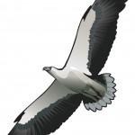 Thala Beach Nature Reserve logo