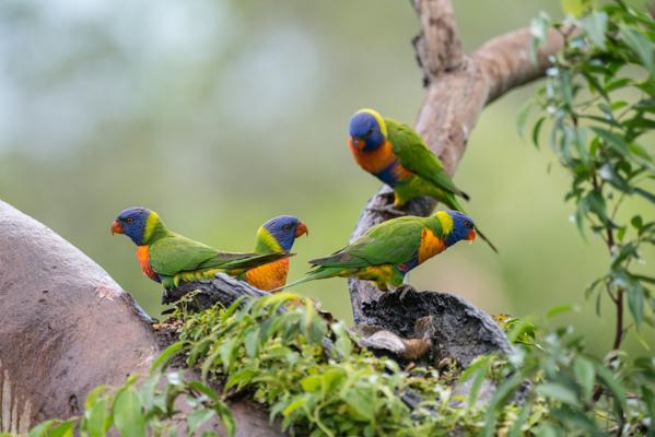 https://www.thalabeach.com.au/wp-content/uploads/2016/03/Thala_Beach_Nature_Reserve_2016__28.jpg