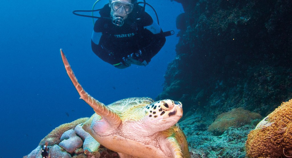 Turtle and scuba diver Great Barrier Reef, Queensland Australia Photo Tourism & Events Queensland