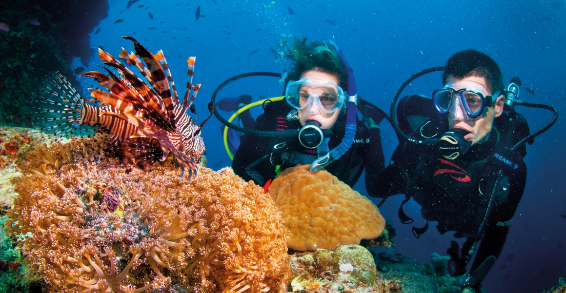 Lionfish and divers. Image Tourism Events Queensland