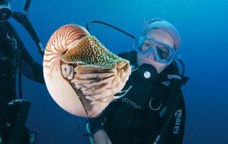 Nautilus. Image Tourism Events Queensland
