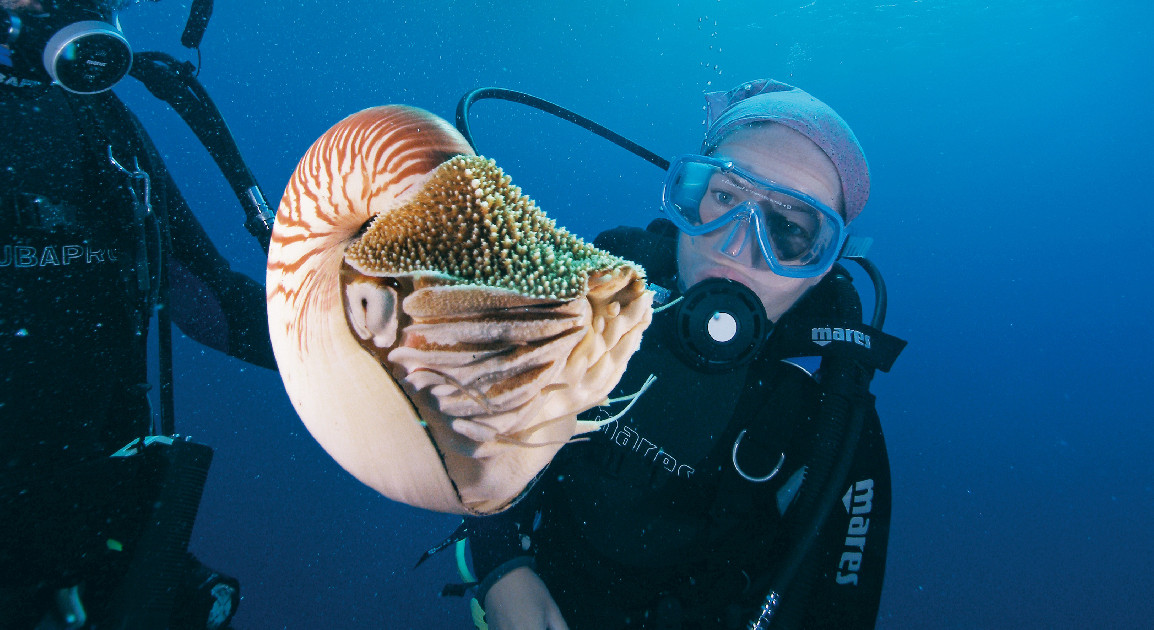 Nautilus. Image Tourism Events Queensland