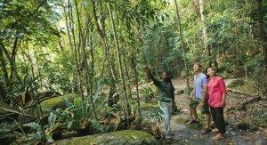 Rainforest tour with Aboriginal Guide