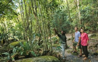 Rainforest tour with Aboriginal Guide