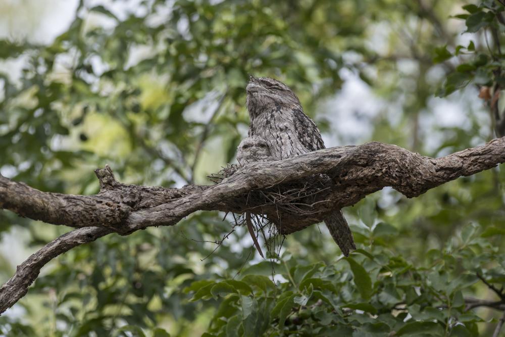 National Bird Week starts with Aussie Backyard Bird Count